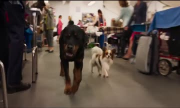 Show Dogs (2018) #2